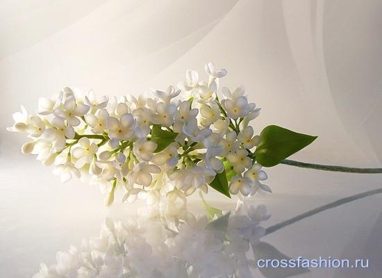 Цветы из холодного фарфора: ветка сирени